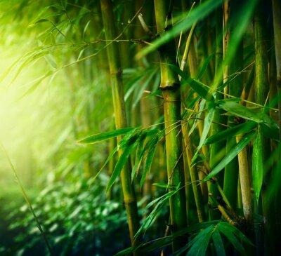 Obraz Bambus
