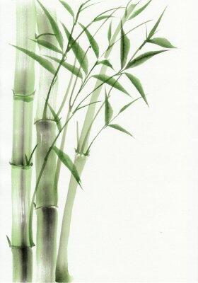 Obraz Bambus původní akvarelu. Asijský styl.