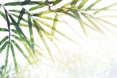 Obraz Bambusy Lesní nebo bambusové listy a sluneční světlo a prostor pro text