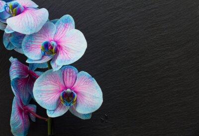 Obraz Banda fialové orchideje