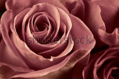 Obraz Banda marsala barevné růžové květy close-up jako pozadí. Měkké zaostření, mělké DOF. Filtrovaný obrázek.