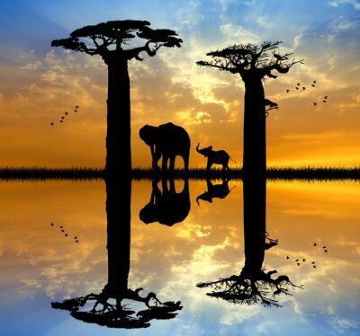 Obraz Baobab a slon při západu slunce