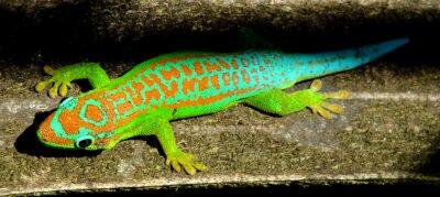 Obraz Barevné tyrkysová zelená gecko