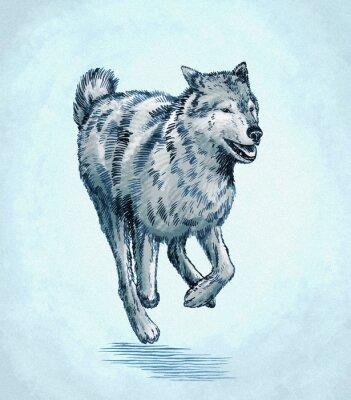 Obraz Barva Engrave inkoust čerpat vlk ilustrační