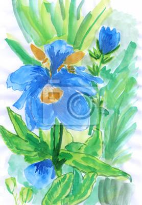 Barva vody ilustrace lily