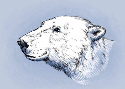 Obraz Barva vyrýt ojedinělých vektoru medvěd
