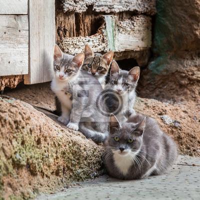 Bezdomovci koťata s mámou v Toskánsku
