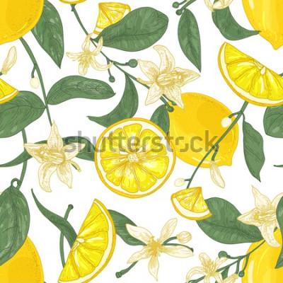Obraz Bezešvé vzor s čerstvými šťavnatými citrony, celé a nakrájíme na kousky, květiny a listy na bílém pozadí. Pozadí s citrusovými plody. Botanická vektorové ilustrace v antickém stylu pro tapety.