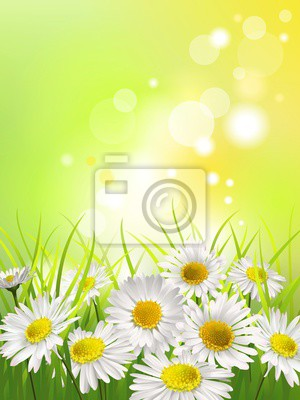 Obraz Bílé sedmikrásky na louce. Na jaře nebo v létě na pozadí.