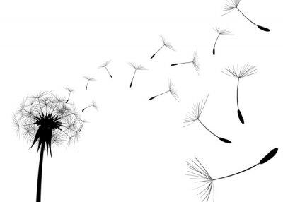 Obraz Blow Pampeliška na bílém pozadí