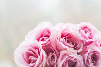 Obraz Bright růžové růže pozadí