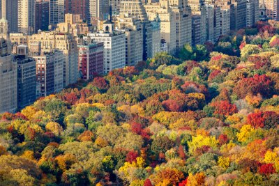 Obraz Brilliant fall colors of Central Park foliage in late afternoon. Aerial view toward Central Park West. Upper West Side, Manhattan, New York City