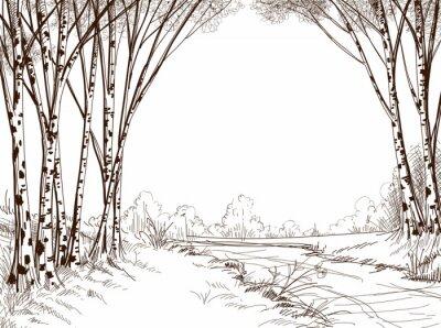 Obraz Bříza les, grafické pozadí