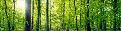 Obraz Buk lesní panorama krajiny
