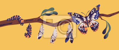 Obraz Butterfly life cycle - caterpillar, larva, pupa, imago eclosion. Stages of metamorphosis, growth and transformation process of winged insect on tree branch. Flat cartoon colorful vector illustration.