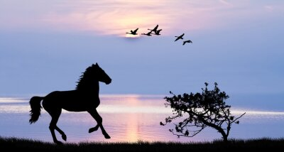 Obraz caballo corriendo por el lago