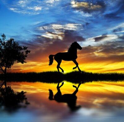 Obraz caballo Salvaje en el lago