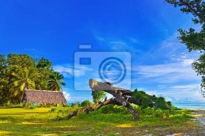 Canopy a strom na tropické pláži