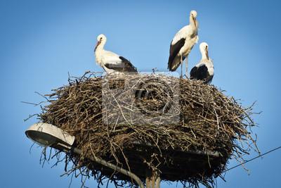 Čápů bílých na jejich hnízdo