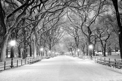 Obraz Central Park, NY covered in snow at dawn