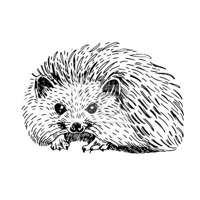 Cerne A Bile Vektorove Ilustrace Roztomile Rucne Kreslene Zvire