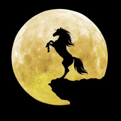 Obraz černý kůň silueta