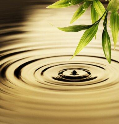 Obraz Čerstvé bambusové listy nad vodou
