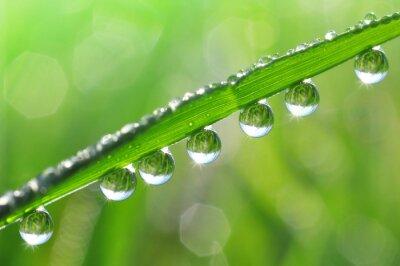 Obraz Čerstvé trávy s kapkami rosy zblízka