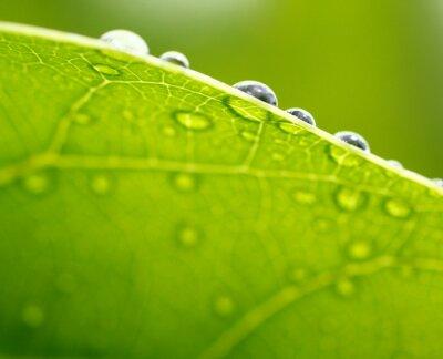 Obraz Čerstvý zelený list na pozadí