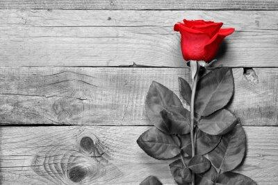 Obraz Červená růže na černém a bílém dřevěném podkladu