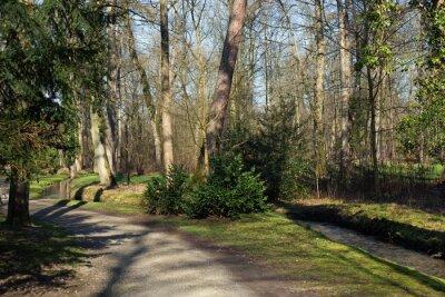 Obraz Cesta a malý potok v lese