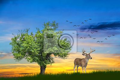Obraz ciervo en el campo