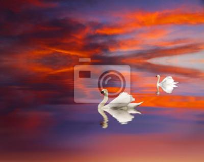 Obraz Cisnes en el Lago