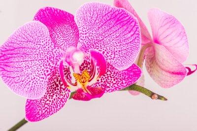 Obraz Close-up orchidejí květ