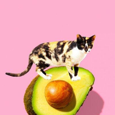 Contemporary art collage.  Cat love avocado. Vegan concept