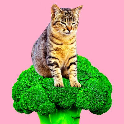 Contemporaryart collage.  Cat love broccoli. Vegan concept