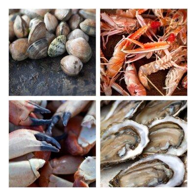Obraz Coquillages Crustacés ovoce de mer Marée pêche