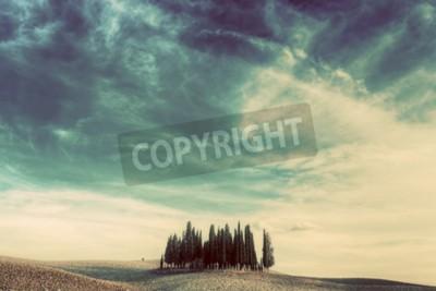Obraz Cypress stromy na poli v Toskánsku, Itálie při západu slunce. Toskánská krajina ve vinobraní, retro nálada