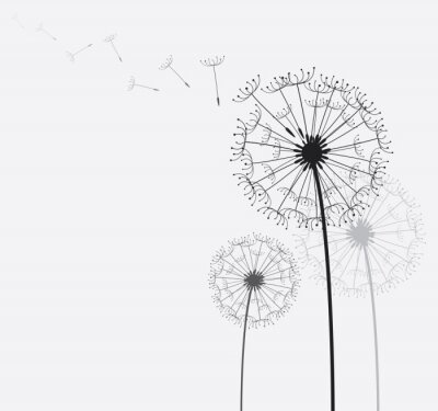 Obraz Dandelion / Pampeliška ve větru