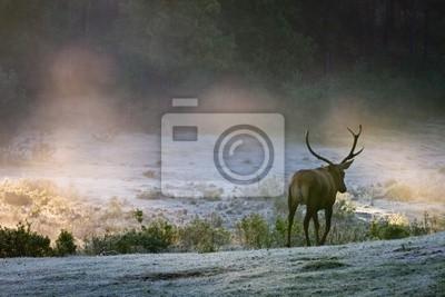 Deer na mlhavé louce za úsvitu