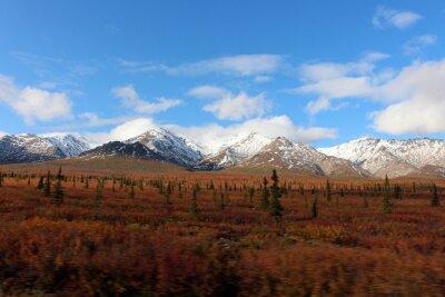Obraz Denali National Park