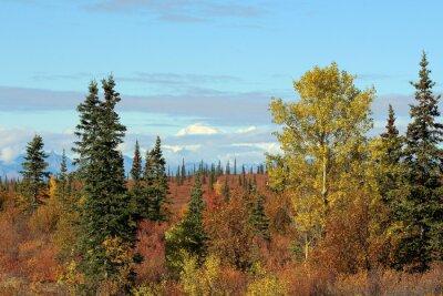 Obraz Denali National Park na podzim