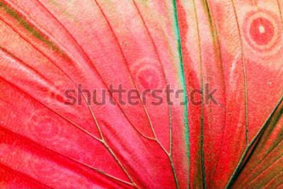 Obraz Detailní makro fotografie červené tropické motýlí křídlo