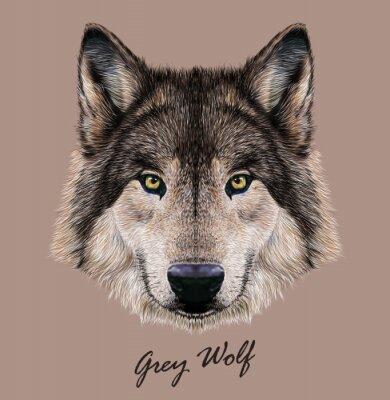 Obraz Digitální vektorové ilustrace Portrét Wolfa.