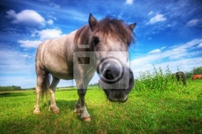 Divoký mladý kůň na poli