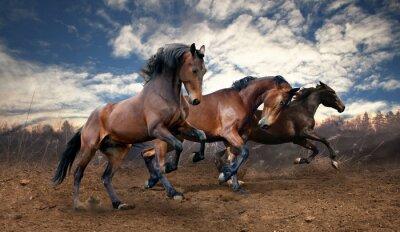 Obraz divoký skok bay koně