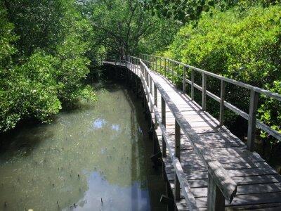Obraz Dřevěný most na Riverside