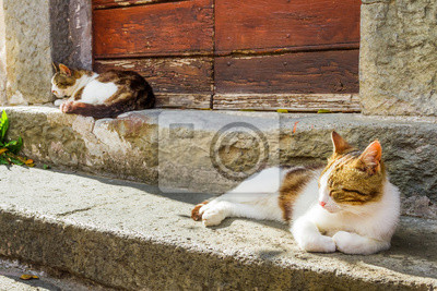 Dvě kočky se vyhřívají na slunci na verandě