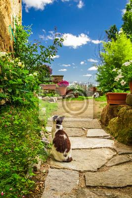 Dvě kočky ve starověkém zahradě