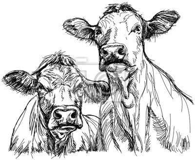 dvě krávy - černé a bílé skica